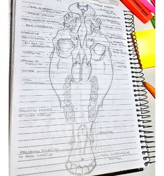Doctors of Chiropractic Treat Cervical Spine Conditions and Associated Temporomandibular Disorders - Chiropractic Therapy Cat Anatomy, Horse Anatomy, Animal Anatomy, Chiropractic Therapy, Doctor Of Chiropractic, Vet Tech Student, College Motivation, Animal Doctor, Vet Med