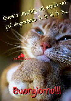 Buongiorno gatto, bella immagine da mandare su Whatsapp - BelleImmagini.it Good Night, Good Morning, Animals And Pets, Cute Animals, Italian Memes, Cat Sitting, Just Kidding, Cat Toys, Say Hello