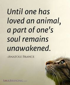 I agree.  My animals complete who I am...