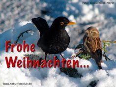 Wir wünschen frohe Weihnachten, Zeit zur Entspannung, Besinnung &  wundervolle Bilder von Ihnen im kommenden Jahr! www.nabu-fotoclub.de