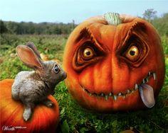 Peta! Peta! Pumpkin ate 'er!