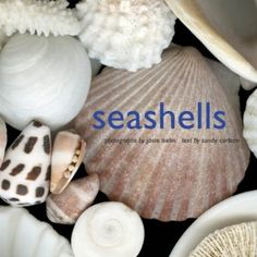Seashells Book-coffee table decor