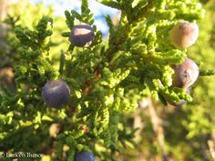 What does slow medicine and herbalism have in common?