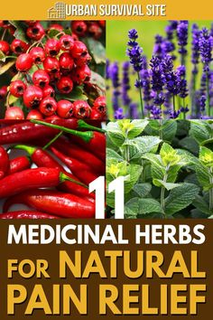 These medicinal herbs are natural painkillers. There's nothing as strong as Vicodin on this list, but they can at least make the pain more tolerable. #urbansurvivalsite #herbs #herbalremedies #naturalremedies #homeremedies