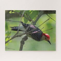 Red-bellied Woodpecker Photo Puzzle. Jigsaw Puzzle - photo gifts cyo photos personalize