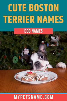 If your Terrier is the cutest around, cute Boston Terrier names would suit them down to the ground! Names like 'Fluffy' and 'Doodle' make equally adorable and funny choices for a dog with cute eyes, read through our list of 600 ideas here.  #bostonterriernames #cutebostonterriernames #namesforabostonterrier Cute Pet Names, Dog Names, Black Around Eyes, Jessica Barker, Boston Terrier Names, Pepe Le Pew, Black And White Face, Cute Eyes, Dog Owners