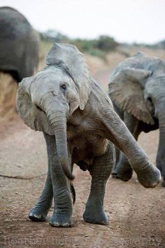 Elefante brincando