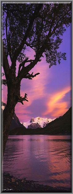 amazing SUNSET -- CHILE ANDES PATAGONIA #by Courtney Meier #sunrise nature landscape amazing sea reflection sky clouds tree lake #Andes Andes del Sur Chile Chilean Andes Glacier Hielo Sur Landscape National Park Nothofagus Patagonia Patagonian Andes Patagonian Beech Southern Andes Torres del Paine clouds dawn ice lake morning morning light mountains reflection silhouette sunrise tree water