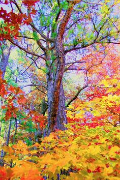 Gorgeous autumn colors...