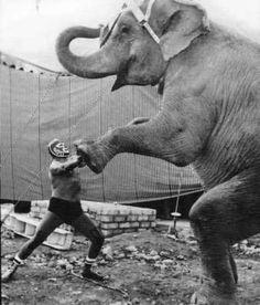 Luchador against an Elephant Vintage Photographs, Vintage Photos, Vintage Postcards, Blue Demon, Mexican Wrestler, Masked Man, Elephant Love, Elephant Art, Bizarre