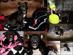 **DONATIONS NEEDED!** Cleft Palate Repair Surgery For Eva (Friends Of Emma ~ For Eva)