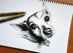 A sketch of my miniature pinscher, Righteous.  @ YannLing Koh