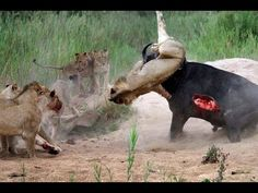 National Geographic - Wild Epic Life and Death - Documentary