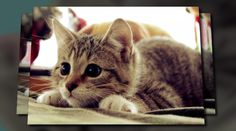 pets - created with Animoto. Click to watch the video!