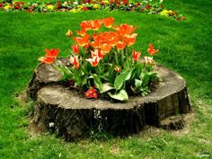 flower Container Flowers, Flower Planters, Home Landscaping, Front Yard Landscaping, Kill Tree Roots, Tree Stump Planter, Tree Stumps, Garden Waterfall, Water Features In The Garden