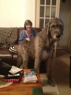 That's not a dog it's a horse! Lol look how big these guys are!