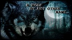 A Wolf By Any Other Name - Fiction ⋆ The Wandering Hippy - Saddlebag Reflections and Rock & Roll