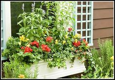 Easy Hanging Baskets and Window Boxes Brought to you by Lowes Creative Ideas Exercise your creative powers by decorating a hanging basket or window box. Copy these simple ideas or use them to fire your imagination Backyard Vegetable Gardens, Herb Garden, Lawn And Garden, Shutter Designs, Tall Plants, Container Flowers, Aquatic Plants, Window Boxes, Flower Boxes