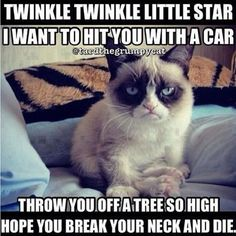 The collection of today are especially for you and Grumpy cat Lovers.These Grumpy cat Memes twinkle twinkle are so cute and as well as funny.Just read out these Grumpy cat Memes twinkle twinkle. Grumpy Cat Quotes, Grumpy Cat Humor, Grumpy Kitty, Grump Cat, Grumpy Baby, Cat Cat, Cats Humor, Funny Cute, Funny Animal Pictures