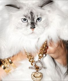 Juicy Couture's holiday collection featuring beautiful cats!
