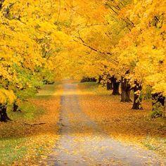 Autumn beginning