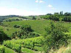 Weinberge Emilia-Romagna Italien
