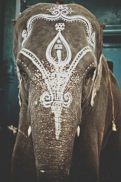 Elephant anointed with white paint decoration in celebration/festival