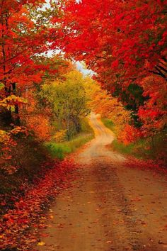 Country road, take me home. Cadillac, Michigan. Photography: Terri Gostola.
