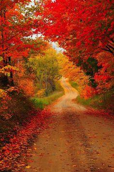 Country road, take me home. Cadillac, Michigan. Photography: Terri Gostola. Upstate New York, Cadillac, Fine Art America, Michigan, Country Roads