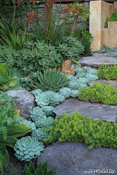 Garden Landscaping Ideas for Front and Backyard Landscaping with Succulents. -Garden Landscaping Ideas- Landscaping Ideas for Front and Backyard Landscaping with Succulents. -Garden Landscaping Ideas-Landscaping with Succulents. Succulents Garden, Planting Flowers, Succulent Plants, Rockery Garden, Succulent Ideas, Succulent Outdoor, Succulent Gardening, Succulent Rock Garden, Flowers Garden