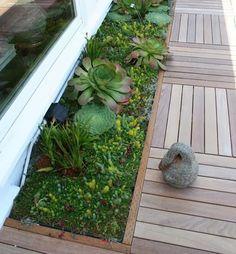 Jardins suculentas - grandes idéias para apartamentos, varandas, terraços