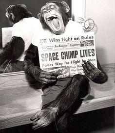 Chimpanzé astronauta após uma missão bem sucedida para o espaço em 1961