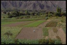 Comprar Tierras de Cultivo ¿Inversión del Siglo?   Bolsa Spain