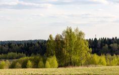 Обои картинки фото весна, лес, деревья, солнечно, утро