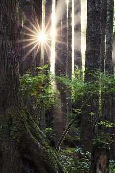~~Aboreal   sunstar in the forest, Pacific Northwest, Washingtonby posthumus_cake (www.pinnaclephotography.net)~~
