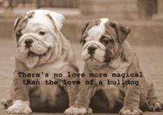 138 Best Bulldogs For My Baby Images Georgia Bulldogs