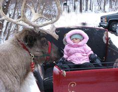 images og reindeer - Google Search