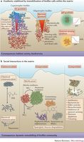 Biofilms are characterized by heterogeneity and social interactions.