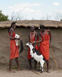 The Best African barbecue: The Masai people of Kenya raise goat that's prized for its rich, herbal flavor; the animals eat juicy leaves from thorny bushes—never grass.