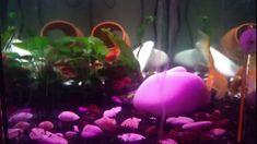 Ucuz Akvaryum Bitki Yetiştirme Ledi- Son Durum Plants, Plant, Planets
