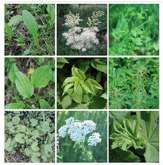 Hortavisa Frugal, Outdoor Gardens, Herbalism, Preserves, Berries, Herbs, Drinks, Plants, Food