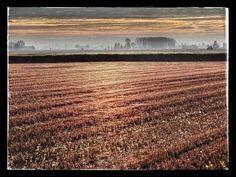 A fil di grano....