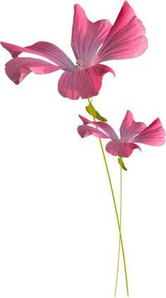 "Photo from album ""IlEtaitUneFoisUnReve"" on Yandex. Acrylic Flowers, Watercolor Flowers, Watercolor Paintings, Botanical Flowers, Botanical Prints, Iris Painting, Transparent Flowers, Watercolor Sketchbook, Butterfly Wall Art"