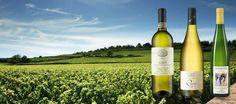 English Asparagus Season Wine Tasting