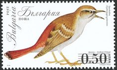 Rufous-tailed Scrub Robin stamps - mainly images - gallery format