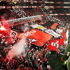 "Ultras SL Benfica no Twitter: """"Eu sou benfiquista, com muito orgulho, com muito amor....""… "" . Benfica Wallpaper, Big Love, Football Fans, Foto E Video, My Books, Twitter, Boys, Bodycon Dress, Club"