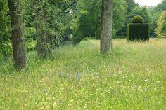 DeWiersse meadow with yew topiary, Netherlands, plinthetal.com