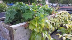 `Michel's blog: Wind door de haren #stadstuin #daktuin Bekijk meer blogs via www.tuinen.nl Plants, Blog, Blogging, Plant, Planets