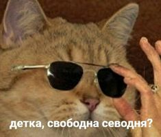 Russian Cat, Russian Memes, Memes Funny Faces, Stupid Memes, Cute Animal Memes, Funny Animals, Reaction Pictures, Funny Pictures, Hello Memes