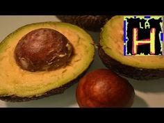 La semilla de aguacate, un poderoso remedio natural the avocado seed a powerful natural remedy - YouTube
